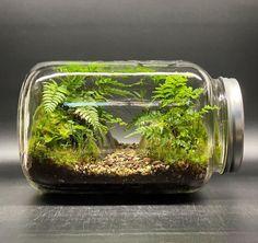 Moss Garden, Diy Garden, Indoor Garden, Indoor Plants, Aquarium Terrarium, Moss Terrarium, Terrarium Plants, Bonsai, Box Deco