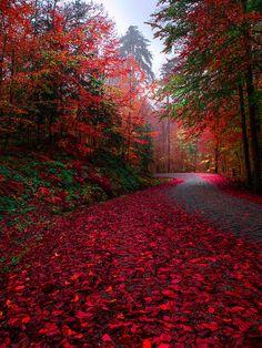 Bolu Yedigöler, Turkey, by Zeki Seferoglu, on - Landschaftsbau Beautiful World, Beautiful Places, Beautiful Pictures, Autumn Scenery, Fall Pictures, Amazing Nature, Beautiful Landscapes, Wonders Of The World, Nature Photography