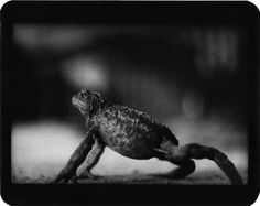 Brooding Animal Photos Shot With A Rare 1960s Japanese Camera