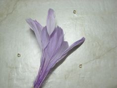 beautiful stripped lilac goose feathers