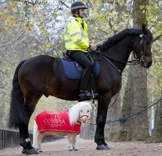 London, UK. Teddy, a miniature Shetland pony, stands next to Insp Simon Rooke on his horse, Quixote, on the Mall in preparation for Olympia Horse Show