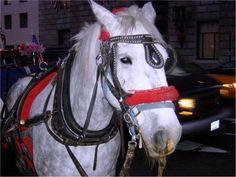"""Un transeúnte vio al conductor del carruaje """"gritarle al caballo para que pasara…"""