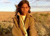 Overview - For many white Australians, this popular film was the first direct emotional experience of what it meant to be one of the 'stolen generations'. Aboriginal History, Aboriginal People, Aboriginal Art, Fence, Rabbit, Movies, Films, Cinema, Australia