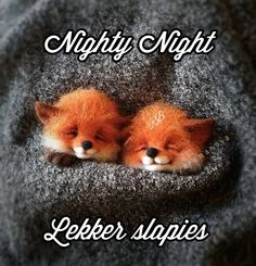 Felt Animals, Baby Animals, Cute Animals, Caber, Good Night Blessings, Animal Crossing Villagers, Nighty Night, First Baby, How To Do Yoga