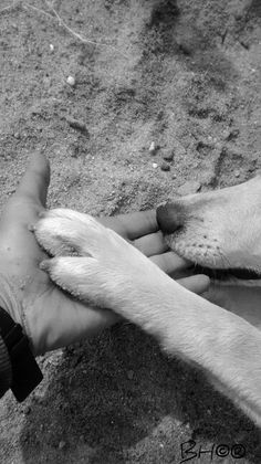 Dogs a great example of True love