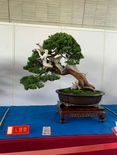 Juniper Bonsai, Plantas Bonsai, Bonsai Trees, Gardening, Amazing, Plants, Life, Nature, Growing Plants
