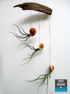 air plants, sea shells, fishing line, and a piece of wood..