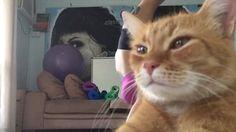 Arrogant cat interrupts yoga session for some camera face time.