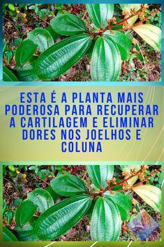 Night Quotes, Natural Make Up, Kombucha, Natural Health, Natural Remedies, Diabetes, Plant Leaves, Medicine, Herbs