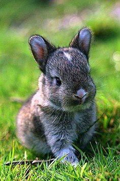 Alert Bunny Rabbit On The Grass