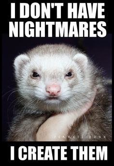 how to stop ferrets biting me