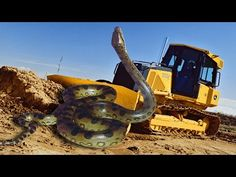Giant Snake Caught in Red Sea - YouTube