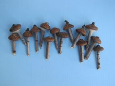 Acorn cap mushroooms for your fairy house/garden. There are also several other DIY fairy house/garden accessories on this site. - DIY Fairy Gardens