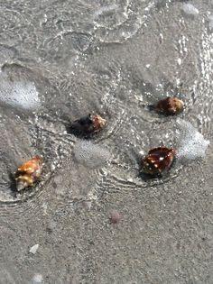 Boca Grande - Morning Shells