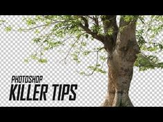 Photoshop Tutorial/Tips - Cut Out Tree in Photoshop | Cropping Defringe in Hindi/Urdu - YouTube