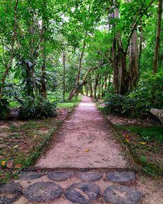 Om Art, Andaman Islands, Mystical Forest, Travel Memories, Wander, Beaches, Trail, Sidewalk, Walking
