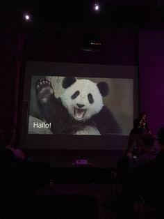 """NegomiT. auf Twitter: """"Pandas und Frauenquote - alles richtig gemacht @DB_Info… Db Info, Panda Bear, Mercedes Benz, Social Media, Night, Twitter, Animals, Pandas, Animales"""