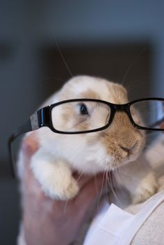 Do These Glasses Make Me Look Smarter?