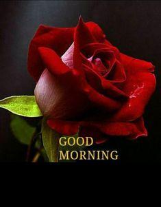 beautiful good morning rose day pinte rh pinterest com