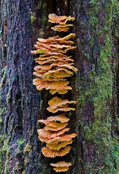 46 #Magical Wild Mushrooms You Won't Believe Are Real ...