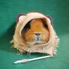Guinea pig cages. Make sure that your wonderful guinea pigs have got the finest things in life. A good sized guinea pig cage, or run, not only makes them more fun to observe, but makes sure they get the physical exercise that they require to be able to remain fit and healthy.