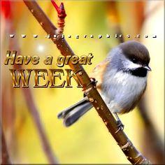 New Week Quotes, Great Week, Good Morning, Seasons, Tags, Feelings, Blog, Buen Dia, Bonjour