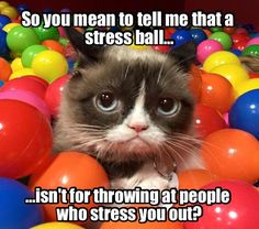 Anger Management with Grumpy Cat.