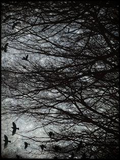 Starry Sky Crow Print 12 X16 Black Crow by BeneathNorthernSkies, $65.00