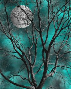 Teal Gray Wall Art Pictures, Tree Moon Decor, Teal Bedroom Wall Art Home Decor Matted Picture - . and they were all TEAL - Bedroom Teal Bedroom Walls, Grey Walls, Bedroom Decor, Teal Bathroom Decor, Moon Pictures, Wall Art Pictures, Night Pictures, Images D'art, Grey Wall Art