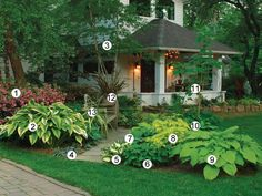 "SHADE PLANTS 1.""Rosebud"" azalea 2.""Aureomarginata"" Hosta 3.River Birch 4. Chinese Ginger 5. ""Eternal Flame"" Hosta 6. Epimedium 7. ""Cinnamon Sticks"" Hosta 8. ""Little Honey"" Hydrangea 9. ""Choo Choo Train"" Hosta 10. Erythrocladium Striped Maple 11. Sundowner Phormium 12. Yellow Wave Phormium 13. ""Blue Shadow"" Hosta"