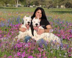 Dogo Argentino breeder and hunter Kassi McLaughlin describes the ideal - and often misunderstood - Dogo Argentino temperament. Modern Molosser | www.modernmolosser.com