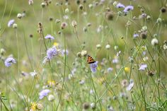 Discover 10 plants that will attract butterflies to your garden, including buddleja and ice plant, with expert advice from BBC Gardeners' World Magazine.