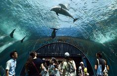 Bebê #golfinho nada ao lado de sua #mãe no #aquário Hakkeijima Sea Paradise, no #Japão. Foto Toshifumi Kitamura/AFP.