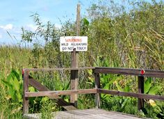 Alligator warning sign at Everglades National Park
