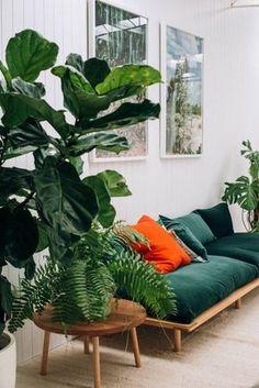 Wohnzimmer, Flur - smaragdgrün, waldgrün gepolsterte Holzbank, Sofa, Feigenbaum - Dark emerald + plants.