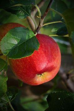 New Fruit, Fruit Art, Fruit And Veg, Fruits And Vegetables, Fresh Fruit, Vegetables List, Vegetables Garden, Healthy Vegetables, Roasted Vegetables