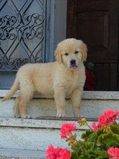Greta, 2 mesi