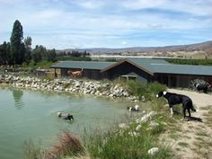Ripponvale Pet Retreat - Kennels, Cattery and Grooming, Cromwell, Central Otago