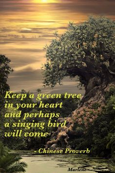 Keep a green tree in your heart and perhaps a singing bird will come.  ~ Chinese Proverb