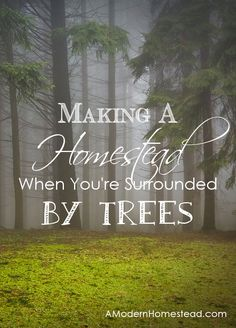 Making a homestead when you're surrounded by trees