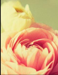 Beautiful flower home screen Cute Home Screens, Rose Wallpaper, Homescreen, Background Patterns, Pink Flowers, Flower Power, Print Patterns, Beautiful Flowers, Prints