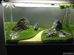 10 Tips on Designing a Freshwater Nature Aquarium Aquascaping, Aquarium Aquascape, Aquarium Setup, Betta Aquarium, Aquarium Design, Planted Aquarium, Aquarium Terrarium, Aquarium Landscape, Tropical Fish Aquarium