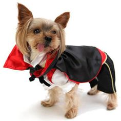 """ICEGREY Dog Pet Vampire Dog Costume Fancy Dress Halloween Cosplay Black XL Feature: Material: cotton velvet Suitable for: winter, spring, autumn Size: XS back length 7.8"""" Read  more http://dogpoundspot.com/dog-luxury-store-628/  Visit http://dogpoundspot.com for more dog review products"""