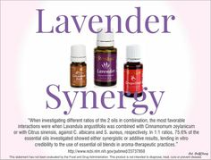 Lavender Synergy - most favorable combinations are lavender and cinnamon or lavender and citrus like grapefruit. Use 1:1.