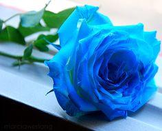 rosa azul tumblr - Pesquisa Google