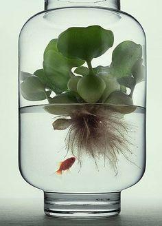 In A Glass Jar