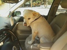 My sisters boyfriend's dog hopped into her car and wouldn't get out