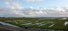 Afbeeldingsresultaat voor molens polder