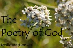 Beautiful blog post....The Poetry of God