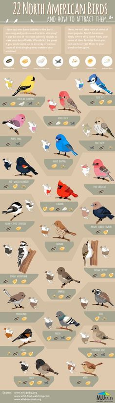 22 Popular North American Birds #Infographic #America #Birds